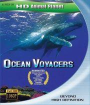 Бороздящие Океаны (2005)
