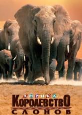 Африка  королевство слонов (1998) смотреть онлайн в хорошем качестве